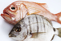Tengeri halak és rákok, csigák (szardínia, homár, osztriga)