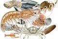 Osztriga, szardínia, rákok, kagylók, tengeri halak